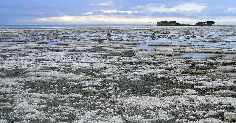 La situation de la Grande Barrière de Corail est encore plus dramatique que ce que l'on imaginait, révèle une nouvelle étude