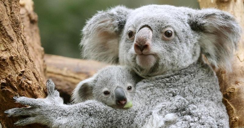 25 photos de moments touchants entre une mère et son bébé dans le monde animal