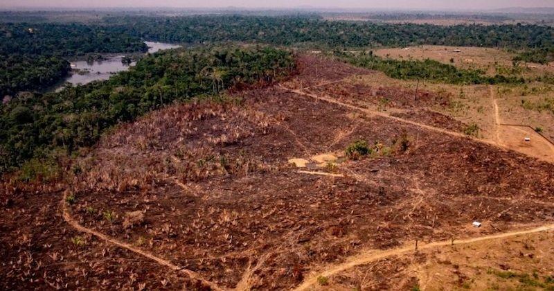L'Amazonie pourrait disparaître d'ici 50 ans