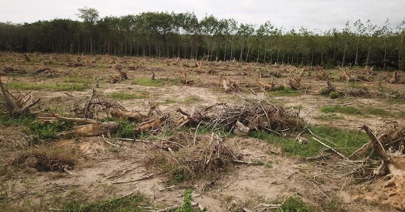 En 2016, la disparition des surfaces forestières a bondi de 51%