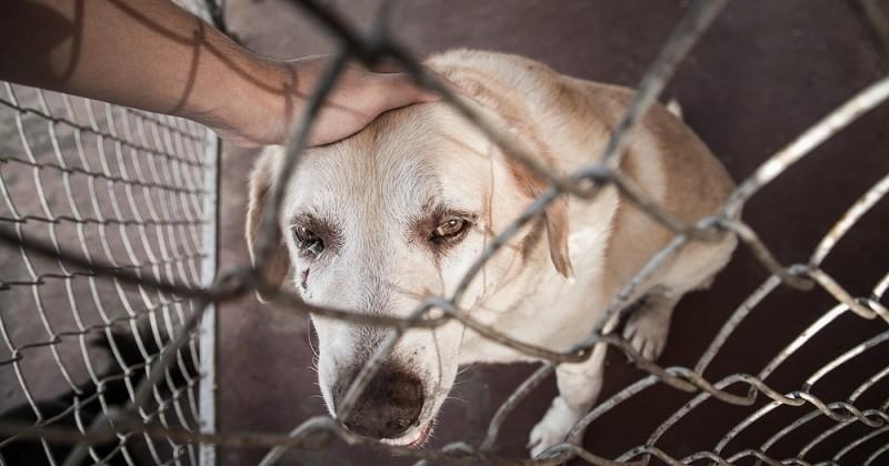 Face à l'abandon des animaux, 240 députés proposent une loi « pour en finir »