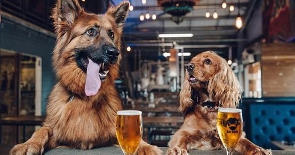 Cette société donne une semaine de congé à ses employés... s'ils adoptent un nouveau chien. Génial, on adore l'idée !