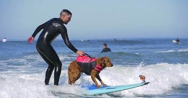 Découvrez l'histoire émouvante de cet ancien soldat américain, dépressif et suicidaire, qui a retrouvé le goût à la vie grâce à un chien surfeur