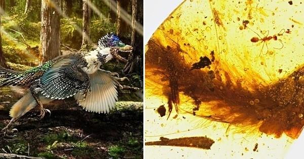 Une queue de dinosaure à plumes parfaitement conservée dans de l'ambre, datant de 99 millions d'années, a été découverte... Et c'est une première historique !