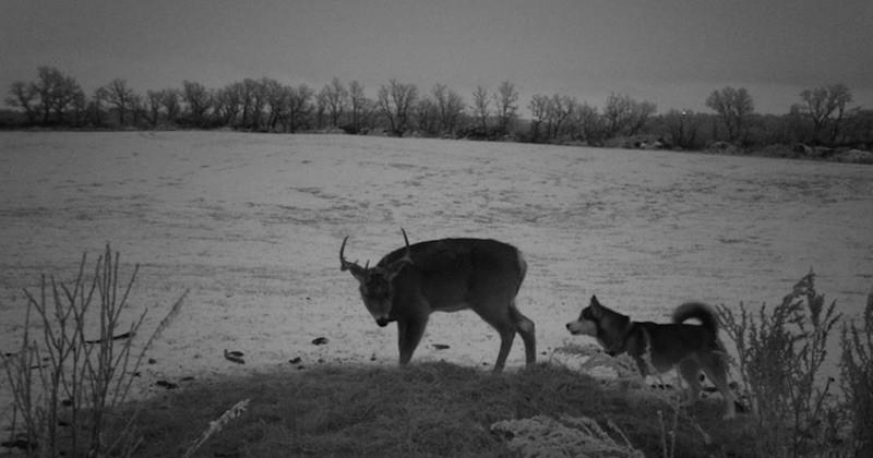 L'improbable et belle amitié entre une chienne fugueuse et un cerf