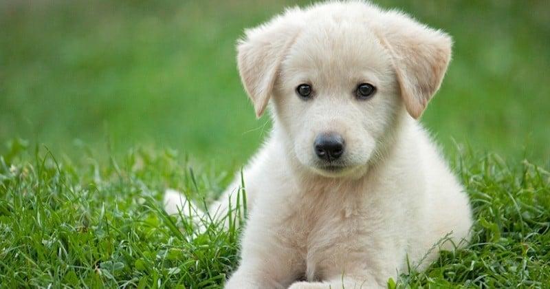 30 Millions d'Amis fustige la tenue d'une vente de chiens aux enchères et réclame son interdiction