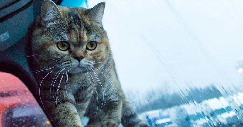 Tora, la chatte voyage dans un camion et traverse 42 États des États-Unis