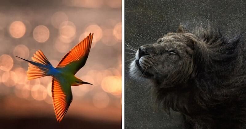 25 sublimes photographies animalières révélées par le concours WildArt Photographer of the Year