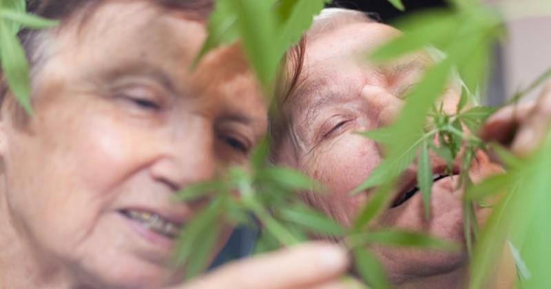 À Genève, une maison de retraite soigne ses résidents avec du cannabis