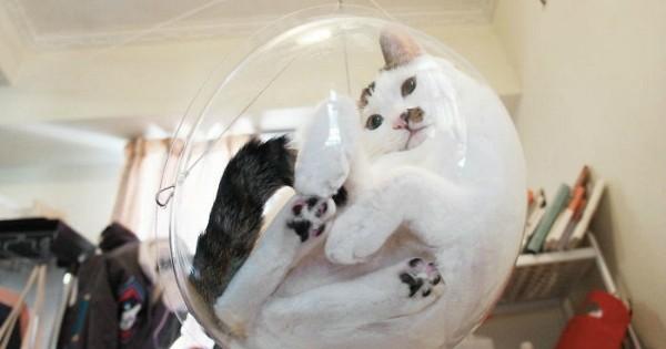 La « Bubble Chair », cet accessoire transparent dont votre chat ne pourra plus se passer !