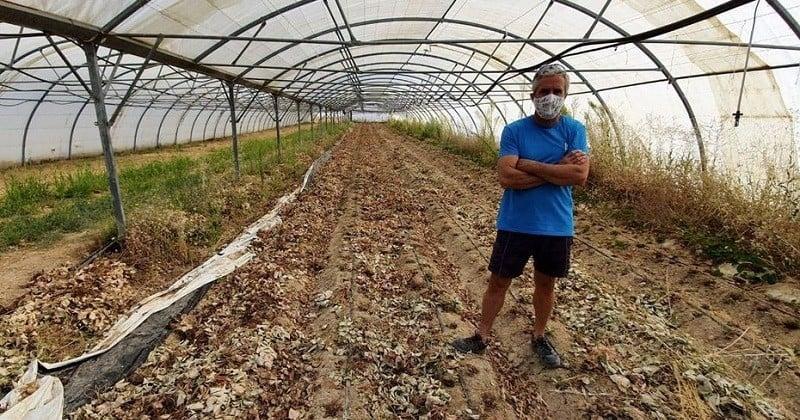Dans les Bouches-du-Rhône, une exploitation bio a été saccagée avec du glyphosate par des agriculteurs voisins