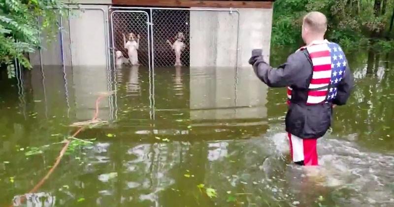 Ils sauvent six chiens des inondations, abandonnés dans leur cage par leur maître durant l'ouragan Florence
