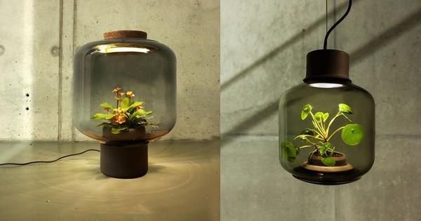 ces lampes ont t dessin es pour faire pousser des plantes en int rieur g nial. Black Bedroom Furniture Sets. Home Design Ideas