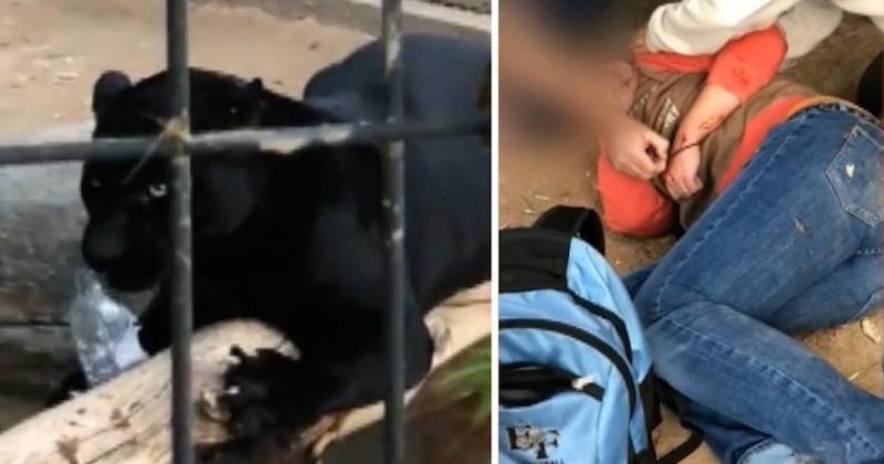 Pour un selfie, une femme attaquée par un jaguar après avoir enjambé les barrières de sécurité
