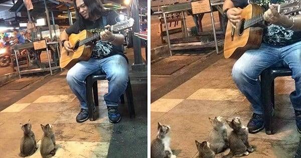 Tout le monde ignore ce musicien dans la rue... sauf ces quatre chatons, fascinés !