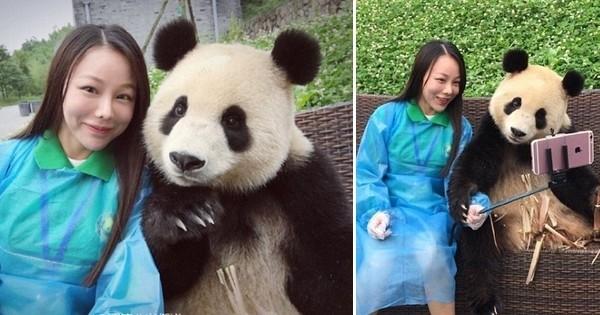 Un panda géant s'amuse à prendre des selfies avec une touriste de passage et c'est trop adorable !