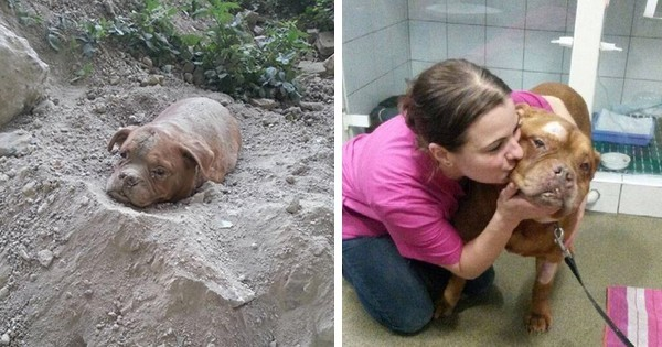 La chienne de sauvetage qui a sauv 52 vies sauve