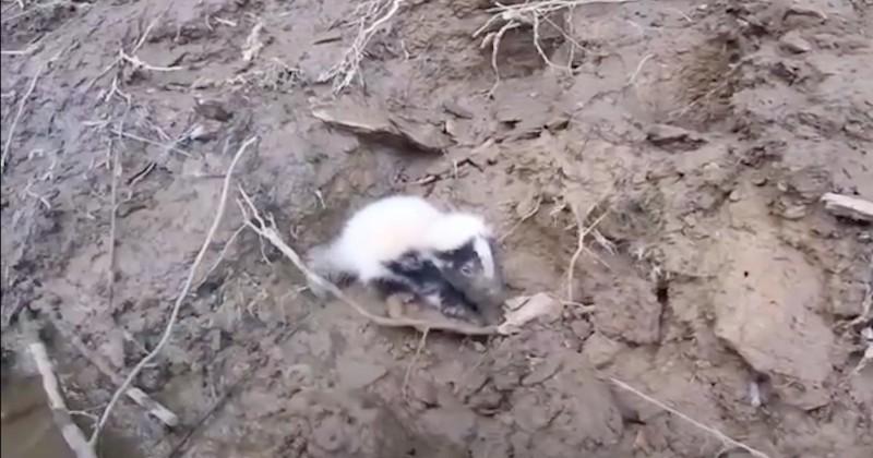 Il sauve deux bébés mouffettes sauvés d'une mort certaine