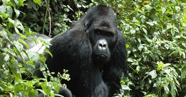 Plus de la moitié des animaux sauvages ont disparu en quarante ans : C'est le chiffre surréaliste et terrible dévoilé par un récent rapport de la WWF