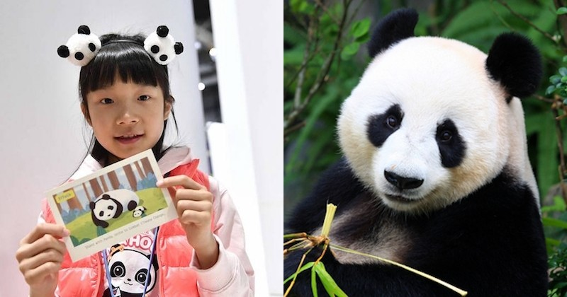 Zoé, une jeune militante chinoise de 9 ans se bat pour sauver les pandas menacés par le réchauffement climatique