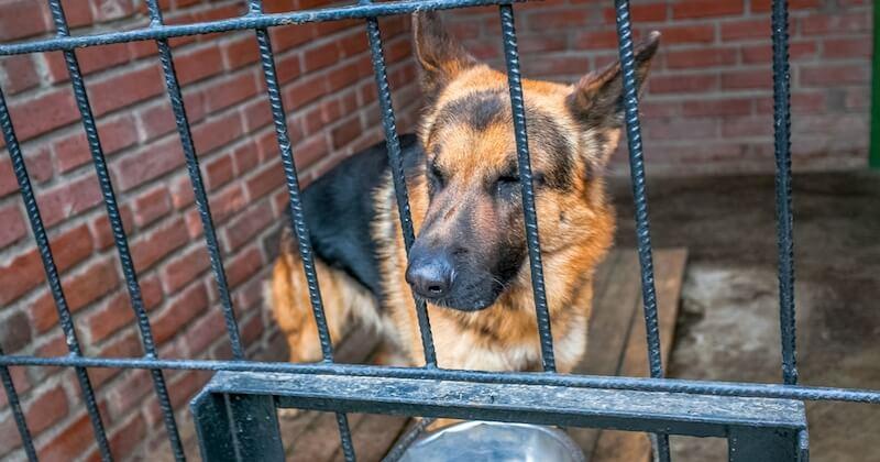 En Espagne, la découverte de 41 chiens maltraités dans une ferme fait froid dans le dos