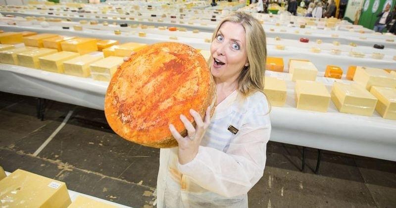 Devenir testeur de fromage, le job de rêve proposé par une entreprise britannique