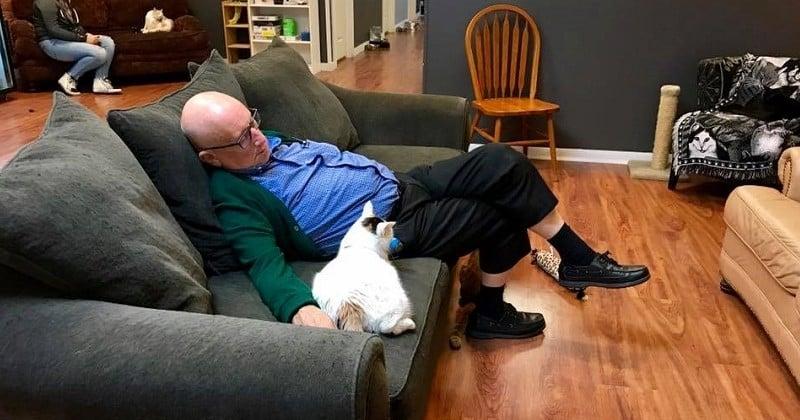 Pour le plus grand bonheur des chats, ce retraité de 75 ans vient passer du temps avec eux