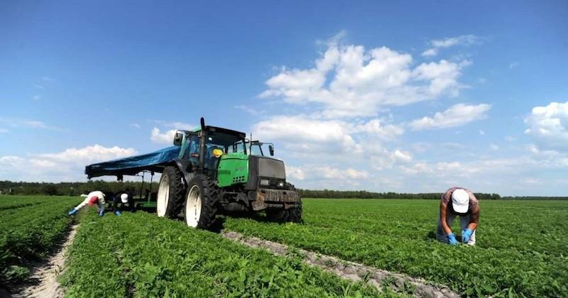 Une agriculture 100 % biologique pourrait nourrir la planète en 2050... À condition de manger moins de viande et de gaspiller moins