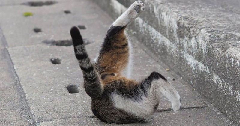La drôle de vie des chats errants du Japon immortalisée à travers des photos amusantes