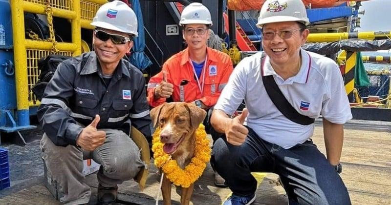En Thaïlande, un chien est retrouvé seul en pleine mer à 220 km des côtes