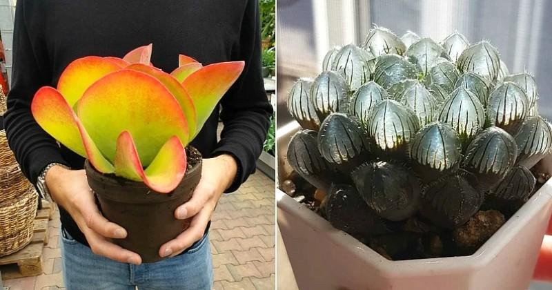 Ces 16 plantes grasses à l'apparence incroyable sont bien réelles