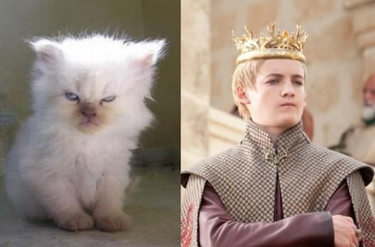 Game of Cats : si les héros de Game of Thrones étaient des chats